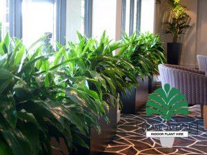 North Sydney Indoor Plant Hire